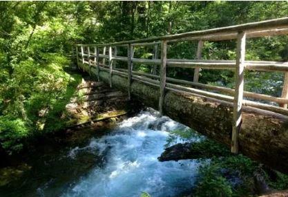Mckenzie River National Recreation Trail Image