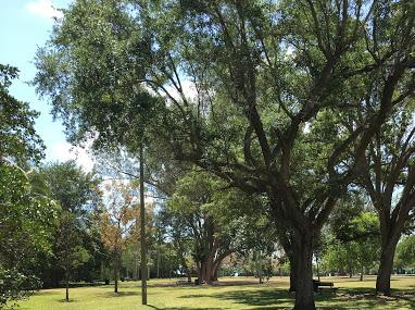 Kennedy Park Image