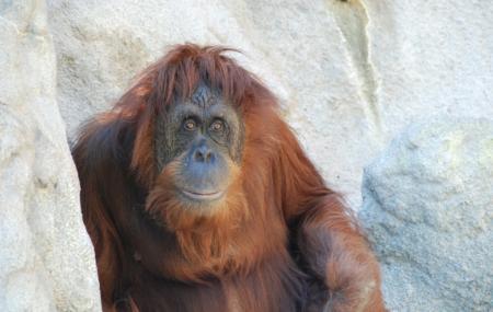 Monkey Jungle Image