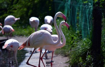 Budapest Zoo & Botanical Garden Image