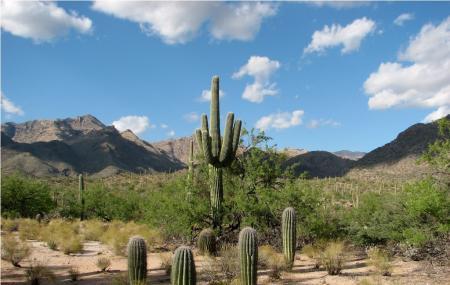 Sabino Canyon Image