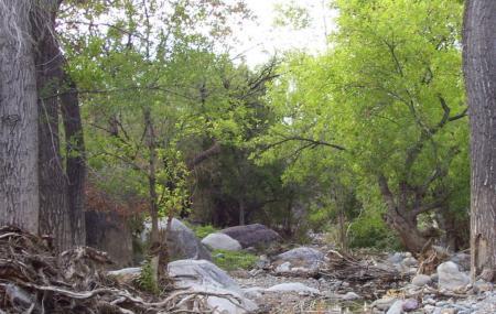 Madera Canyon Image