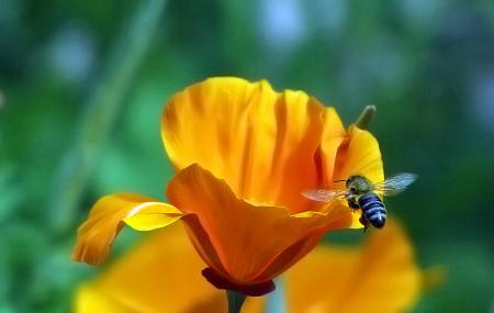 Tucson Botanical Gardens Image