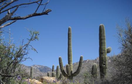 Catalina State Park Image