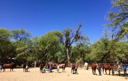 Houston's Horseback Riding Image