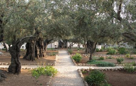 Gethsemane Image