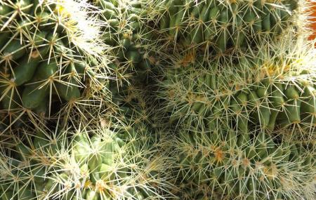B & B Cactus Farm Image