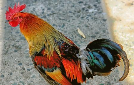 Himalayan Bird Park Image