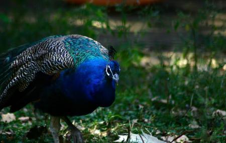 Bucharest Zoo Image