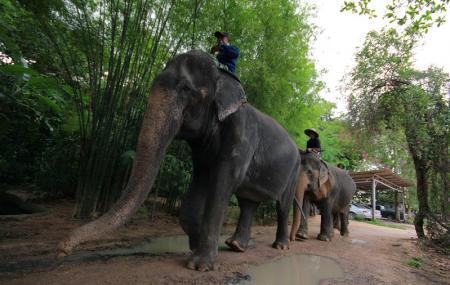 Elephant Village Image