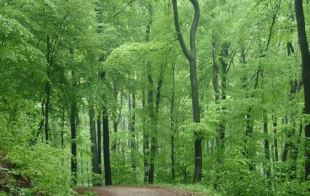 Vienna Woods Image
