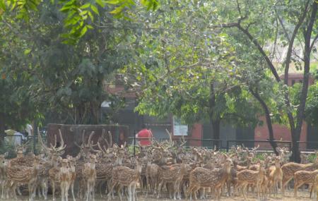 Jaipur Zoo Image