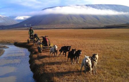 Svalbard Husky Image