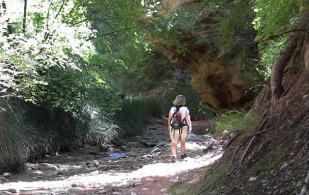 Taylor Creek Image