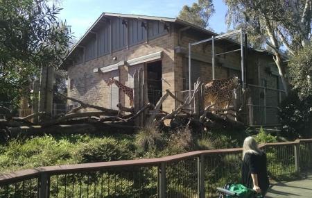 Sacramento Zoo Image