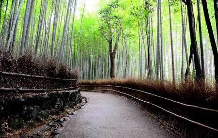 Arashiyama Image