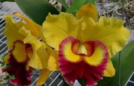 Sundance Orchids Image