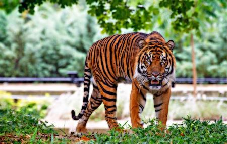 Tiger! Tiger! Langkawi, Langkawi Island