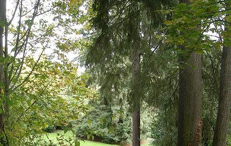 Viretta Park Image