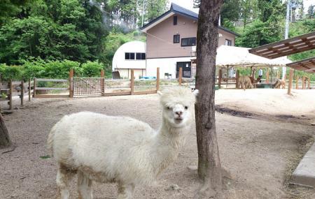 Yamakoshi Alpaca Farm Image