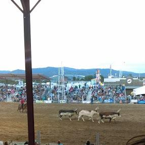 Rodeo De Santa Fe Image