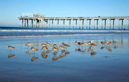 La Jolla Shores Image
