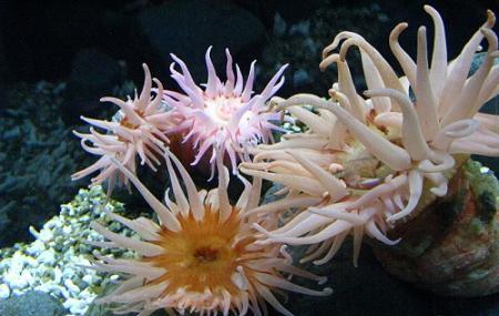 Osaka Aquarium Kaiyukan Image