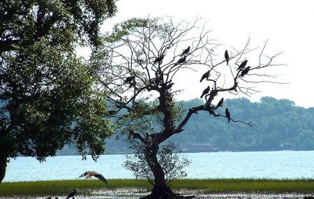 Dr Salim Ali Bird Sanctuary Image