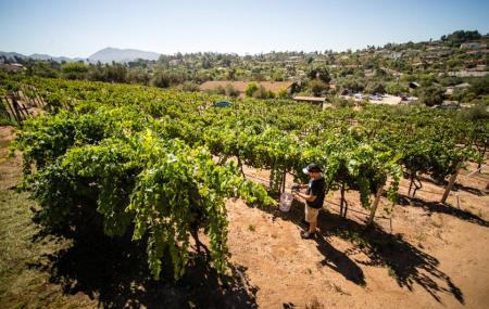 Bernardo Winery Image