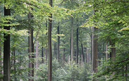 Sonian Forest Image