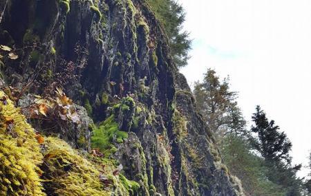 Winner Creek Trail Image