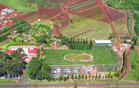 Dole Plantation Image
