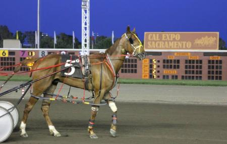 Cal Expo Horse Racing Image