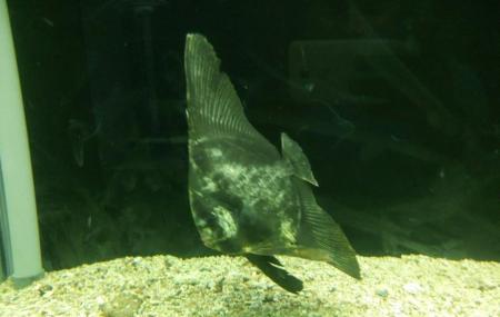 Vizhinjam Marine Aquarium Image