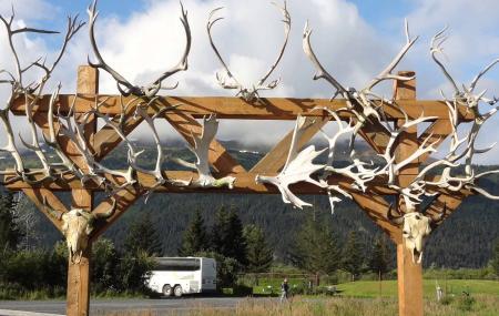 Alaska Wildlife Conservation Center Image