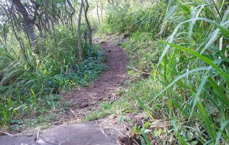 Waahila Ridge State Recreation Area Image