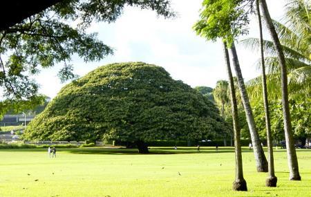 Moanalua Gardens Image