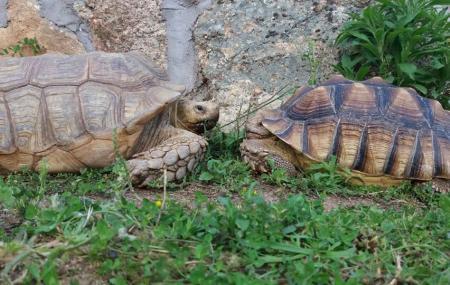 Safari Madrid Image