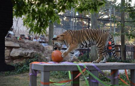Amarillo Zoo Image