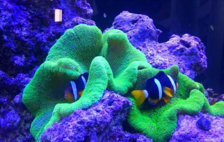 Varkala Aquarium Image