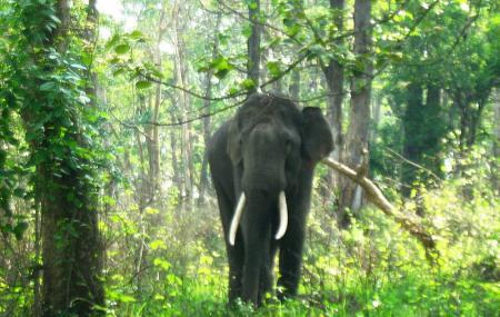 Mudumalai National Park Image
