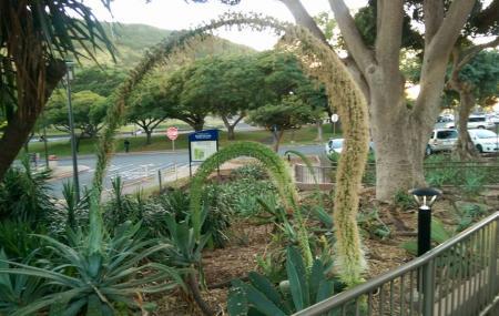 Kcc Cactus Garden Image