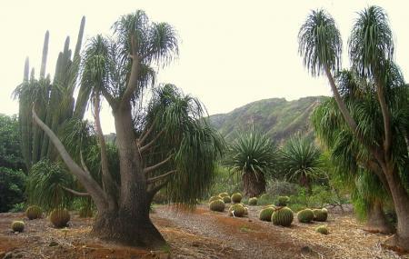 Koko Crater Botanical Garden Image