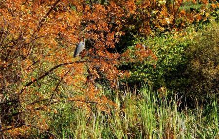Kathryn Albertson Park Image