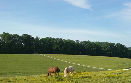 Land Of Little Horses Image