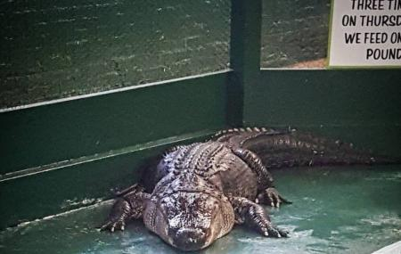 Arkansas Alligator Farm & Petting Zoo Image