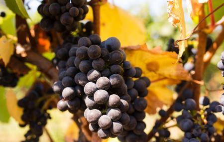 Beauregard Vineyard Tasting Room And Winery Image