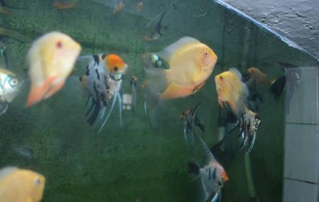 Batumi Aquarium Image
