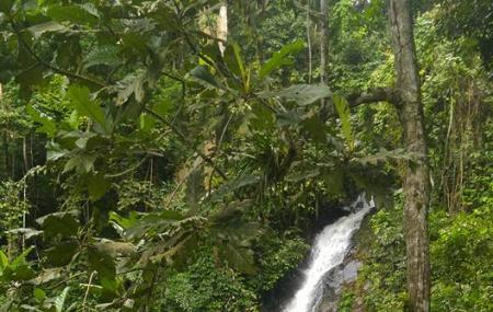 Durian Perangin Waterfall Image
