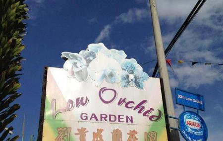 Orchids Farm Image